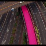 Pink path shot 1